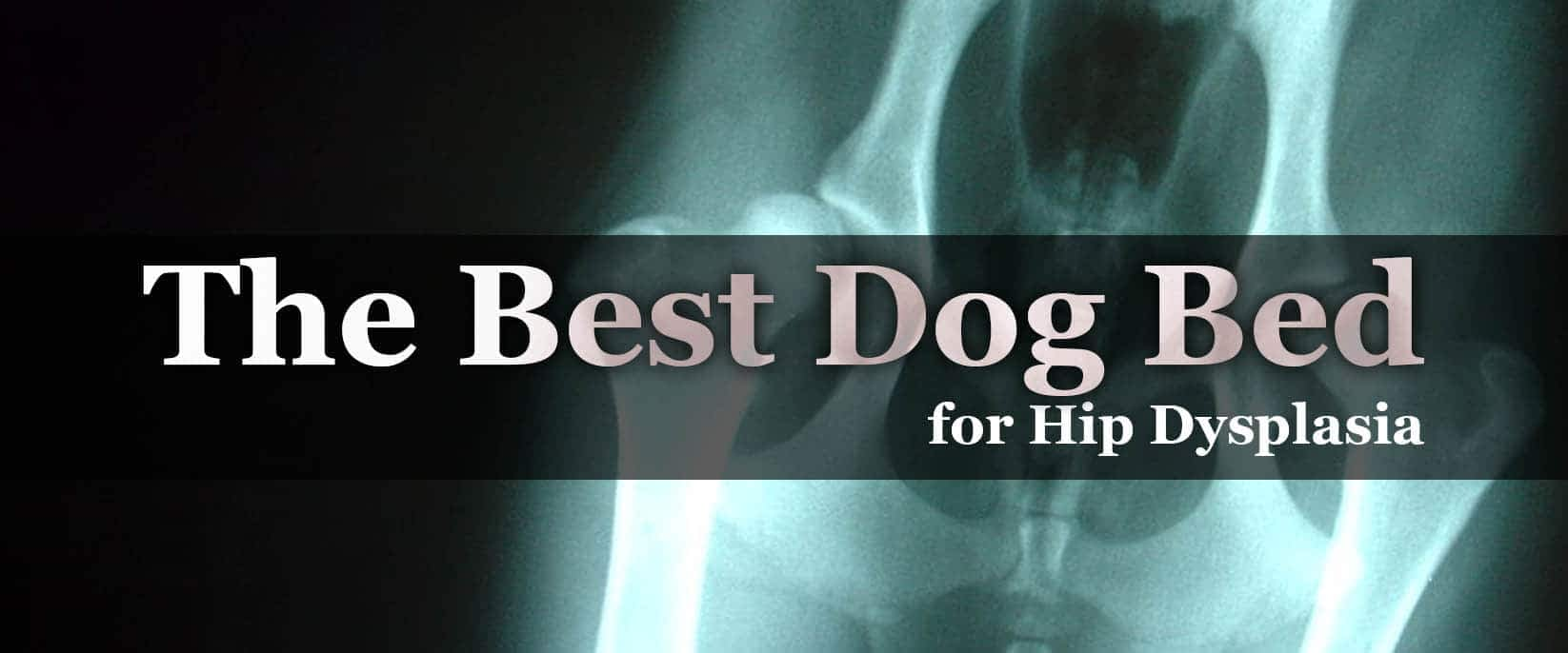 The Best Dog Bed for Hip Dysplasia