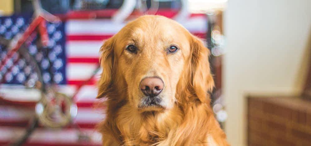 Can I Give Human Glucosamine Chondroitin to my Dog